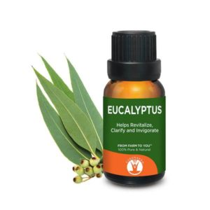 Eucalyptus Essential Oil for sale cheap